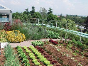 Dove Piantare Gli Ortaggi In Giardino