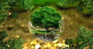 ecologia ambiente